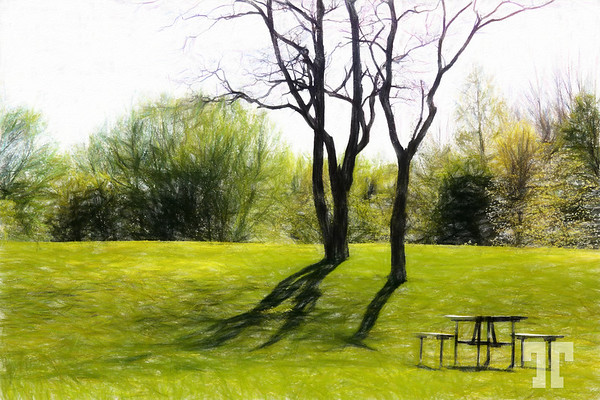 in-the-park-collingwood-ontario-COLORED-PENCIL