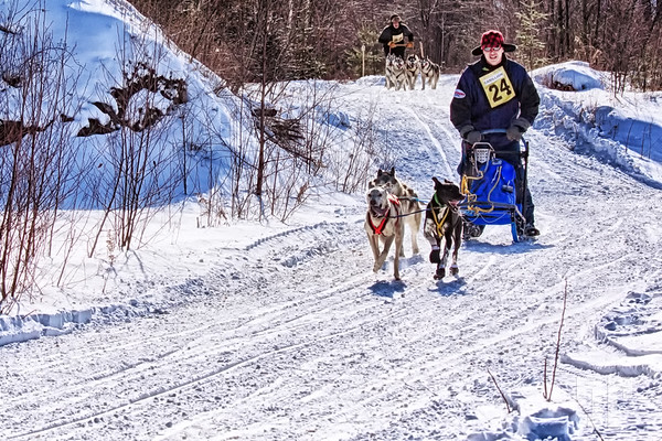 Dog sled race, Ontario 2013 (aa)