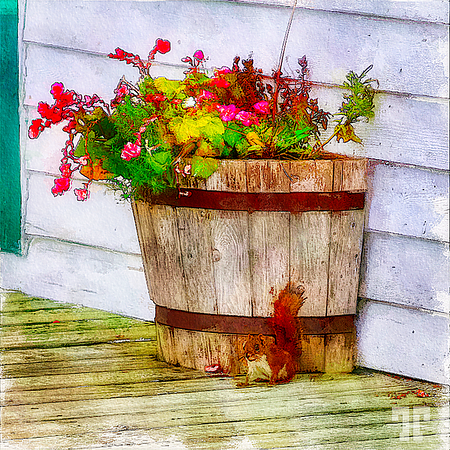 squirell-flower-pot-nfl-watercolor