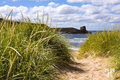 """More grass on the beach, Nova Scotia  * My photo today is NOT a """"leftover"""" - I just took several photos on that beach, which I thought was nice..."""
