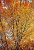rusty-leaves-paint-oil