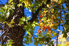 Point-Pelee-National-Park-Canada-foliage