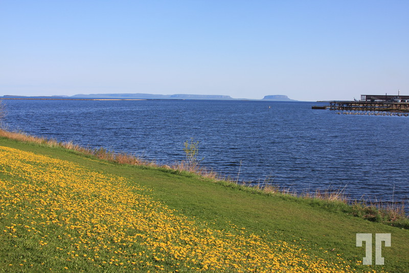 Landscape with dandelions - Thunder Bay Ontario,  Canada