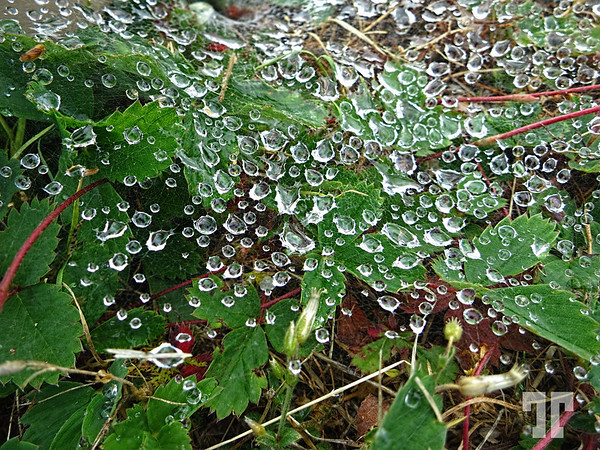 Morning dew droplets