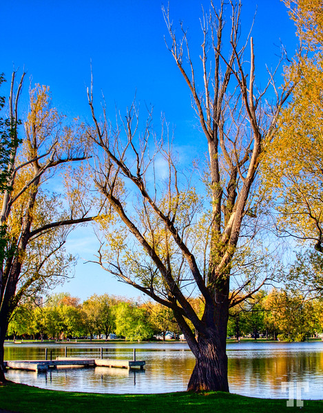 trees on Dows Lake, Ottawa, Canada