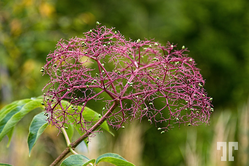 Purple inflorescence<br /> <br /> I don't know what plant is this but it looks so nice... :)