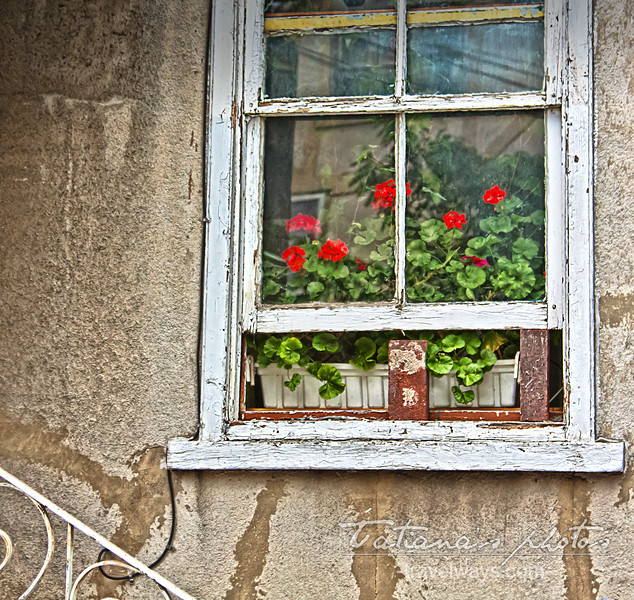 June 8, 2012<br /> <br /> Old window with geraniums