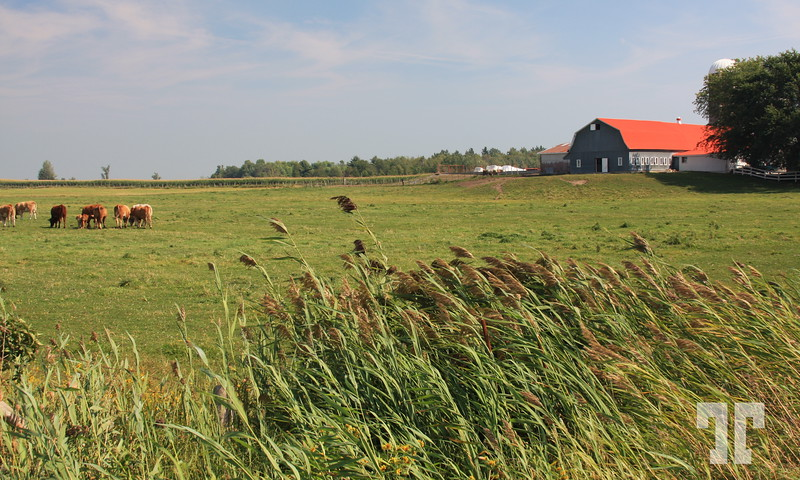 Farm in Southern Quebec Quebec countryside