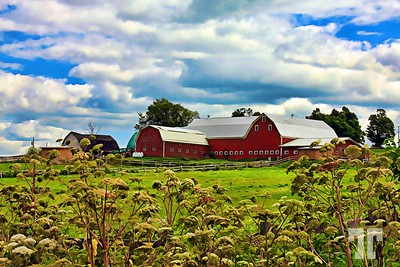 nova-scotia-barns-paint