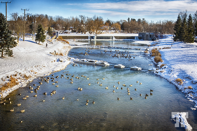 winterscape-with-geese-ontario