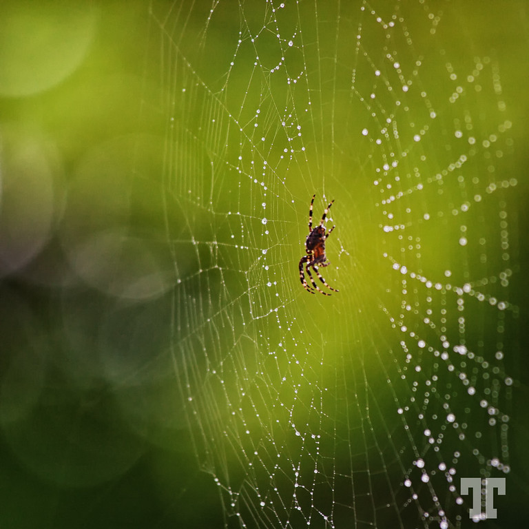 spider-web-lake-erie-XL.jpg