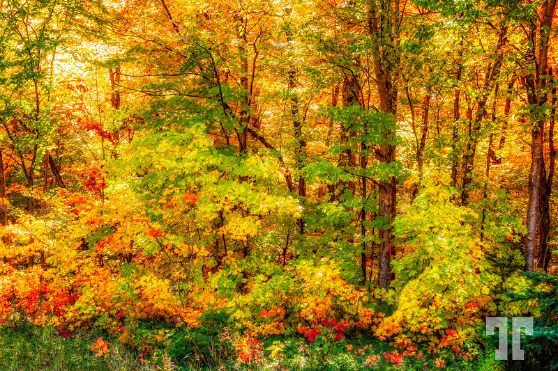 autumn-in-the-forest
