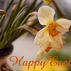 12 April 09<br /> <br /> Happy Easter to those who are celebrating this holiday today!