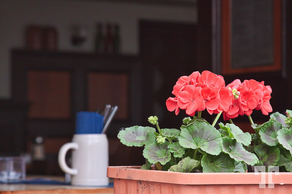 Geranium-flowers-restaurant-window,-kologne,-germany