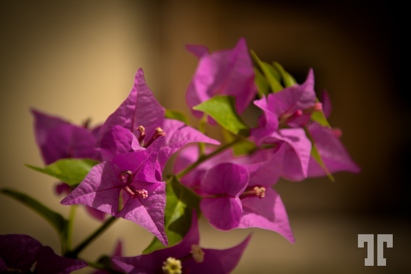 bokeh-flower-loreto-baja-california-2