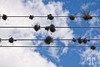 Up on the electric wires (zz)