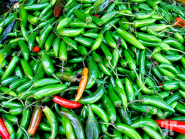 green-chile-peppers-studio