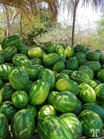 watermelons-mexico-art-width-4000px-gigapixel