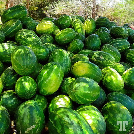 Green-watermelons-mexico-art