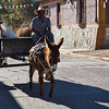 donkey-transportation-oaxaca-mexico