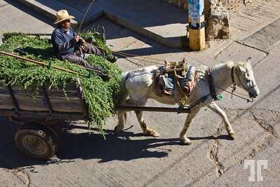 grass-loaded-wagon-Guadalupe-Etla-Oaxaca-Mexico