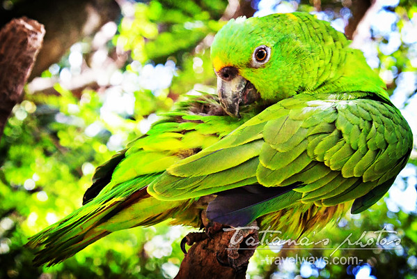 xcaret-cancun-green-parrots-5