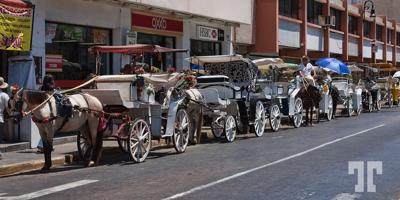 April 5, 2010  Line of horses and chariots waiting in the hot sun for clients, in Merida, Mexico Mexico, Yucatan