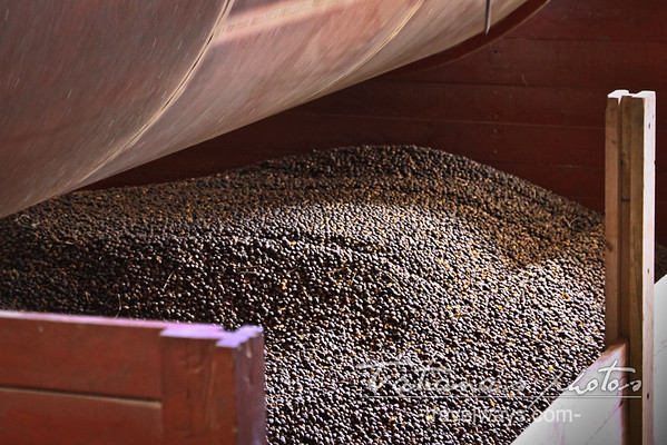 coffee-production-finca-kotowa-boquete-panama-3
