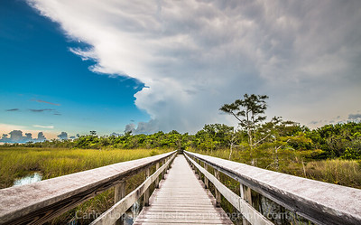 Everglades National Park #3