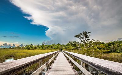 Everglades National Park #3