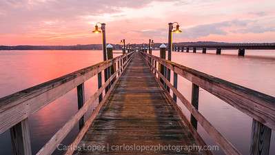 Davis Island Pier #1