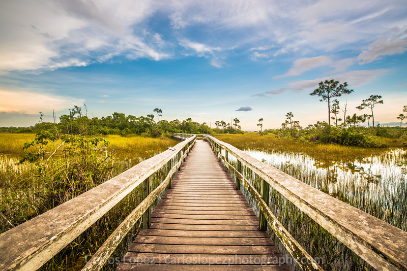 Everglades National Park #1