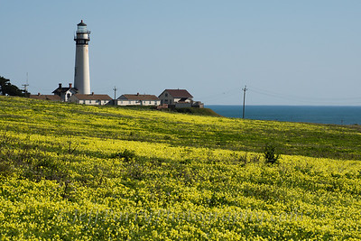 sour Grass field at Pigeon Point