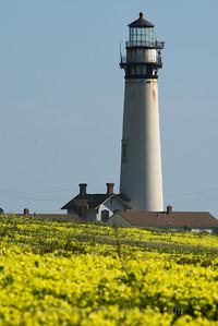 Pigeon Point Lighthouse Oxalis telephoto
