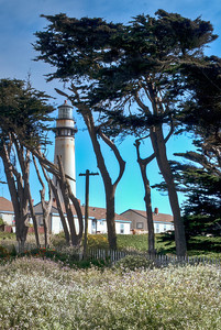Cyprus Trees at Pigeon Point Lighthouse