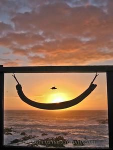 Whale Rib Sunset