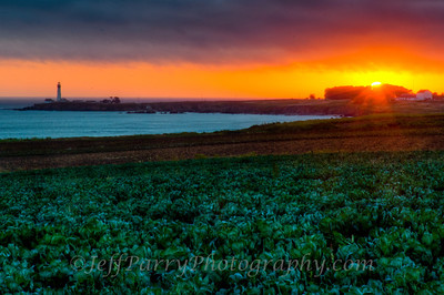 Brussle sprout sunset at Pigeon Point