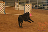 PPOC Agility Trial July 28 & 29, 2007