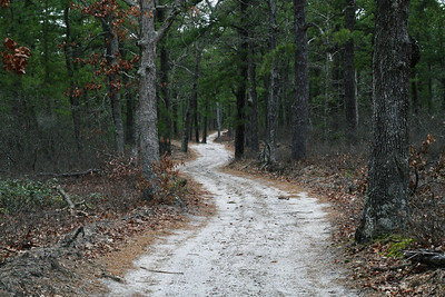 Pine Barrens NJ 2010