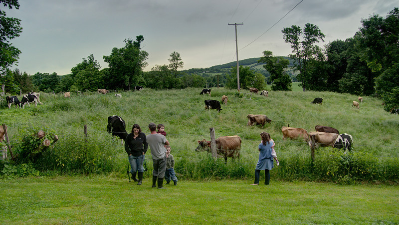 family watching cows