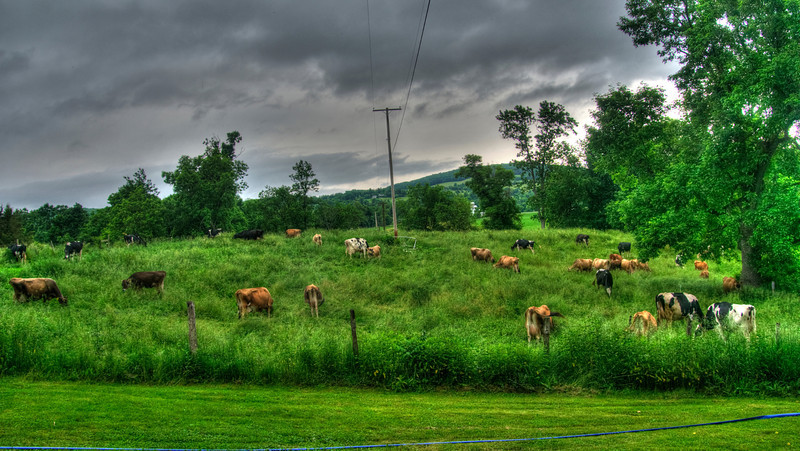chase herd_tonemapped