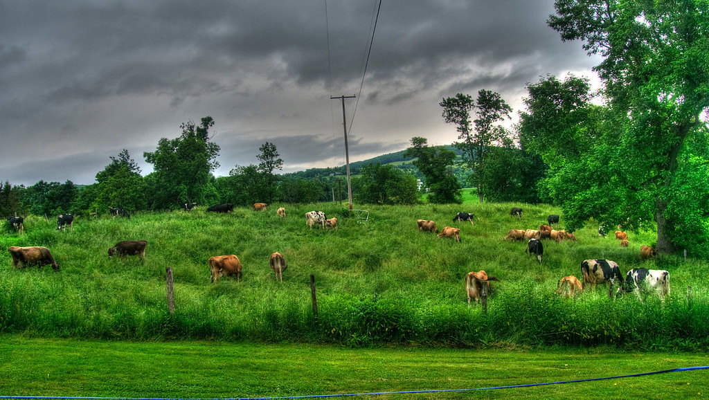 chase herd_tonemapped