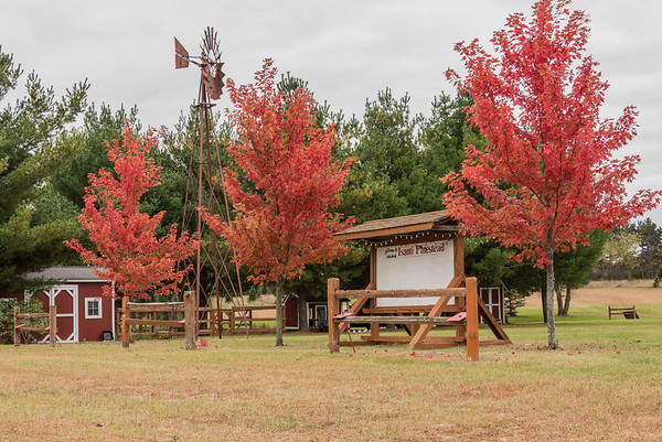 Fall at the Pinestead
