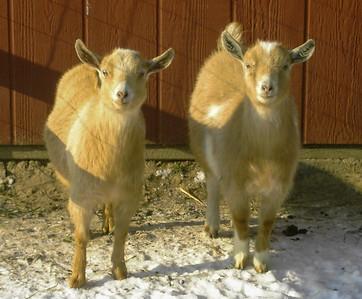 Our Farm Animals