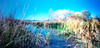"""Wetlands Pond and Reeds""  --  Wetlands Park, Clark County, Nevada"