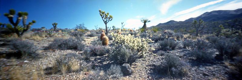 """YKL Foothills""  --  Mojave Desert near Walking Box Ranch, Searchlight, Nevada"