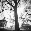 Liepos / Linden trees