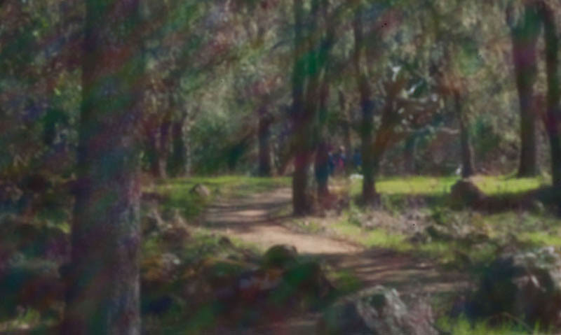 A  Magical Forest. Sunlight entering pinhole at an angle is diffracted into colored rays and patches. Scene is at Bouverie Preserve.