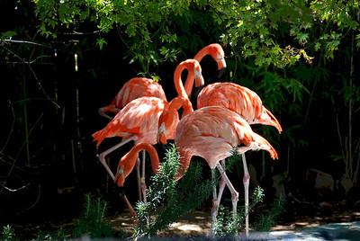 At the Charles Paddock Zoo, in Atascadero, CA
