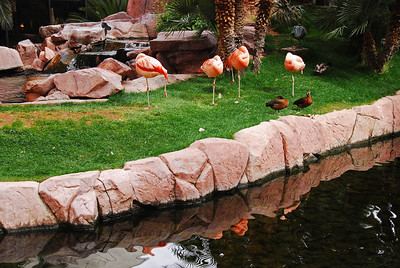 The FLAMINGO LAS VEGAS, Hotel & Casino  From a Wildlife Habitat to a 15-acre Caribbean-style water playground, the Flamingo Las Vegas resort has everything that visitors to Vegas could want and need; also including great location on The Strip, great service, great gaming and PLENTY of Flamingos--live and artificial !!